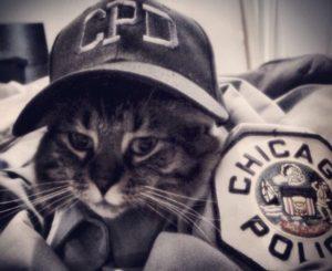 chicago police cat