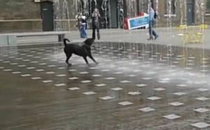 dog playing in fountain