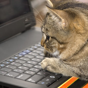 cat laptop computer