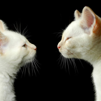 two cats looking at each other