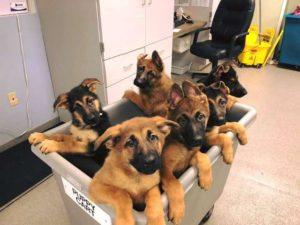 puppy-cart